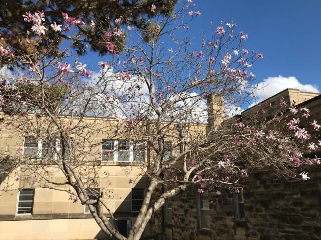 flowering_tree_ecs_19march2020